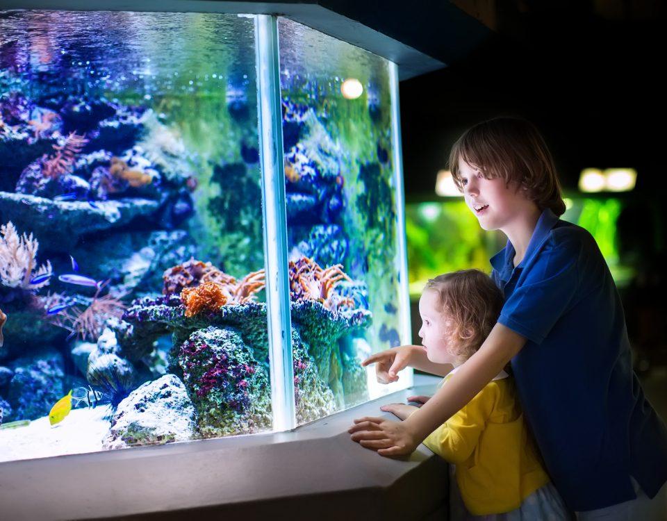 Portal akwarystyczny Zakładanie akwarium morskiego Wiadomości akwarystyczne