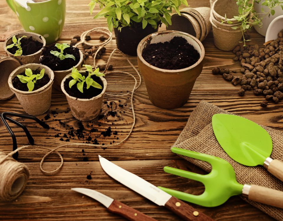 projektowanie ogrodów Toruń
