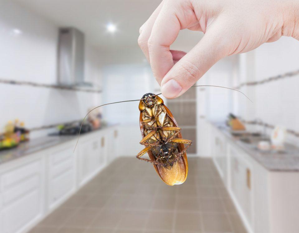 Zwalczanie owadów - Zwalczanie pluskiew- Zwalczanie karaluchów - Zwalczanie korników - Zwalczanie insektów - Dezynsekcja - Fumigacja - Usuwanie pluskiew, karaluchów i korników